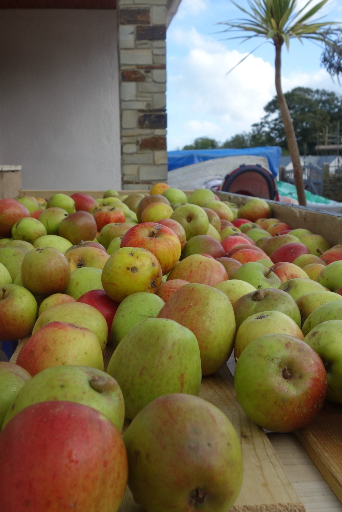 Cider Making Scroller - 2014 10 19_8317