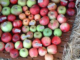 Cornish Apples