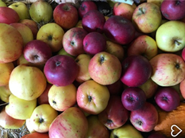 Heligan Apples